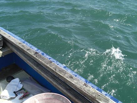 黒鯛15-6