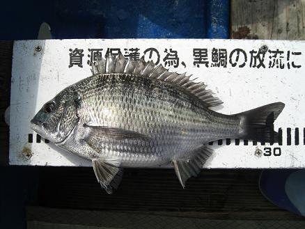 黒鯛16-8