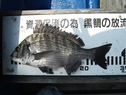 黒鯛21-10