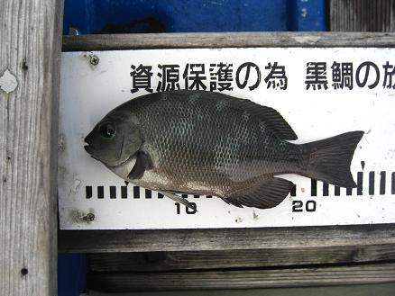 黒鯛21-6