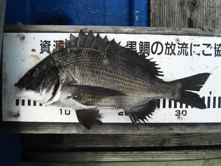 黒鯛21-9