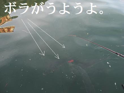 黒鯛22-4