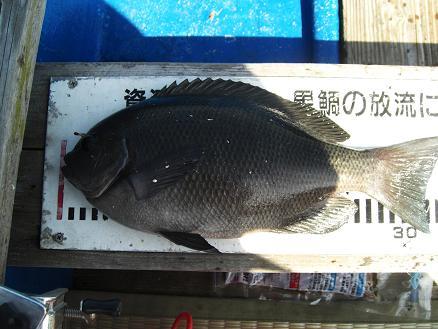 黒鯛22-8 (2)