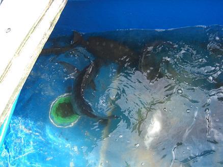 黒鯛22-11