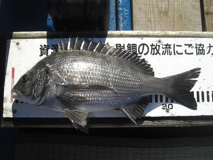 黒鯛25-9