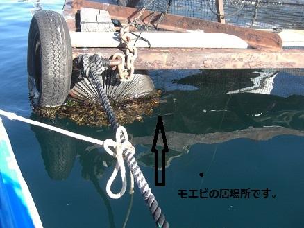 黒鯛26-5