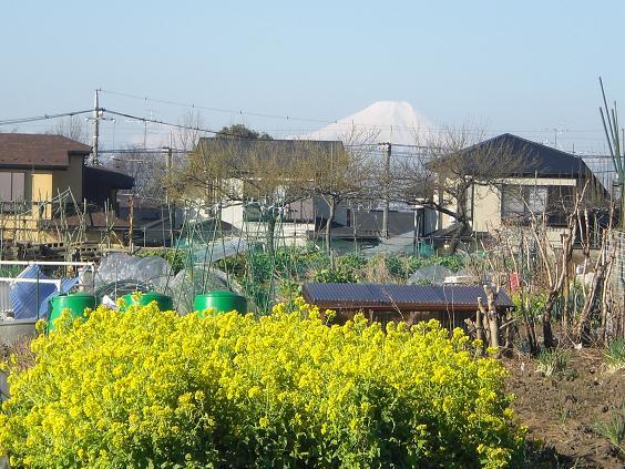 11.3.27ブログ用冨士、欅、月例、氷川神社の倒れた灯篭 (3)