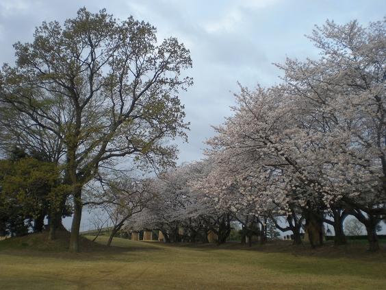 11.4.10桜・朝のジョギング風景 (37)