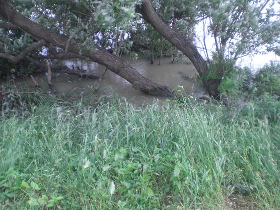 11.5.30大雨後のゴルフ場のクリーク、荒川 (53)