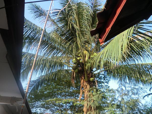 6 11.10.24アパートの椰子の木 (8)