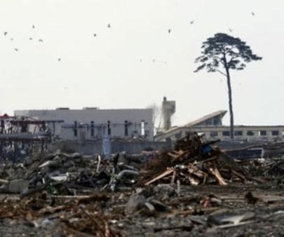 japan-tsunami-lone-pine-lg Terra