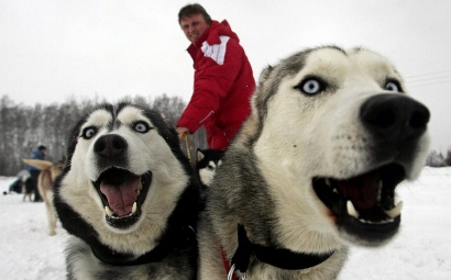 sled-dogs02-700x436 (410x255)
