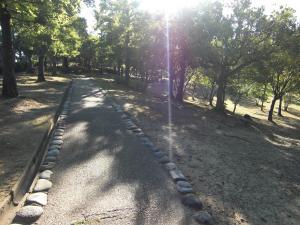 2010_0804_中央公園1
