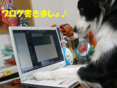 PC010070.jpg