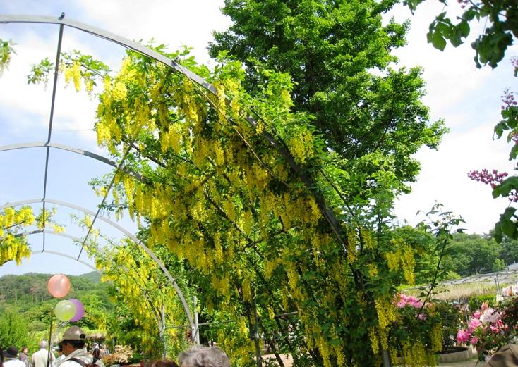 20100516-kifuji1.jpg