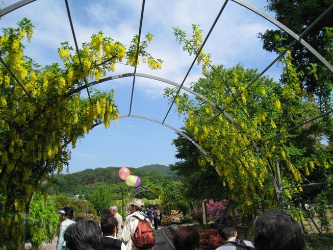 20100516-kifuji2.jpg