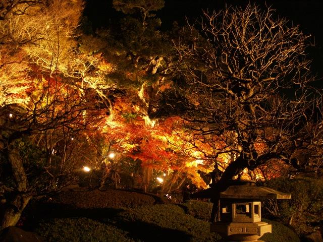 長谷紅葉ライトアップ20091