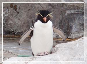 葛西-ペンギン05