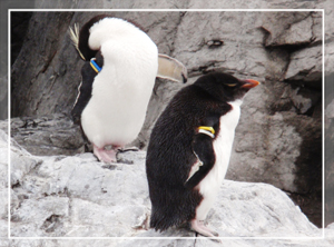 葛西-ペンギン02