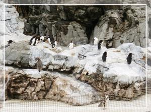 葛西-ペンギン01