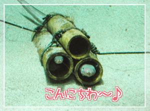 葛西-長細い魚