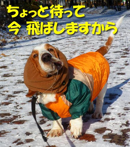 12_chilly04.jpg
