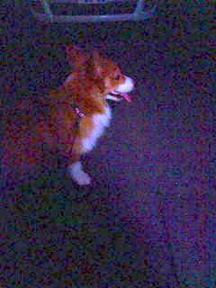 闇夜に犬。
