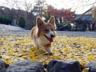 秋の景色だね~。