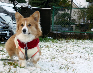 湘南も雪景色