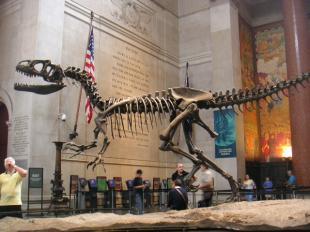 yeahsaurus-NH.jpg