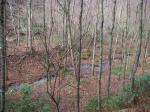 落ち葉に覆われた渓