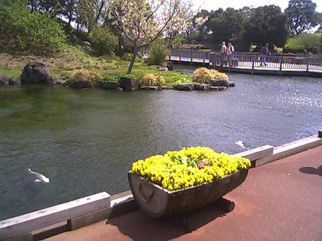 2010 鎌倉・桜・チューリップ031