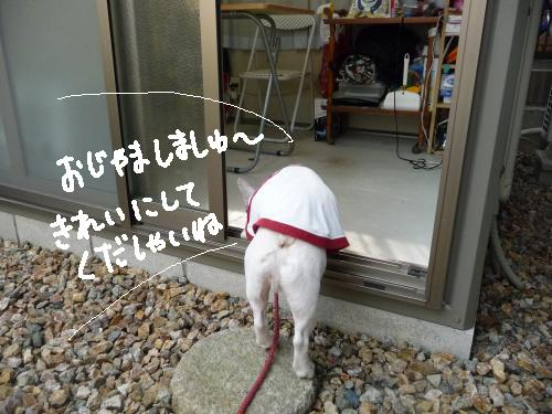 P1050440_convert_20091129223109.jpg