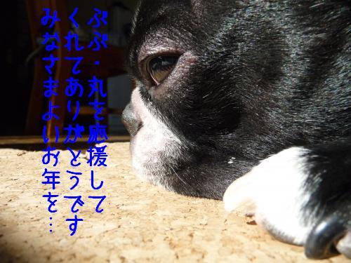 P1050964_convert_20091230210355.jpg
