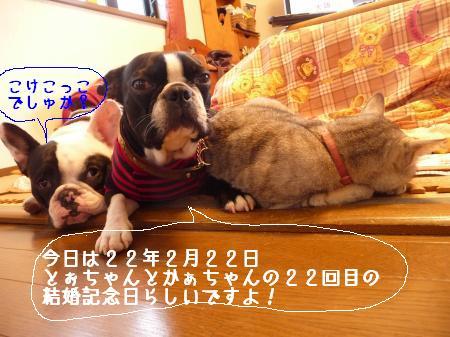 P1060772_convert_20100222233617.jpg