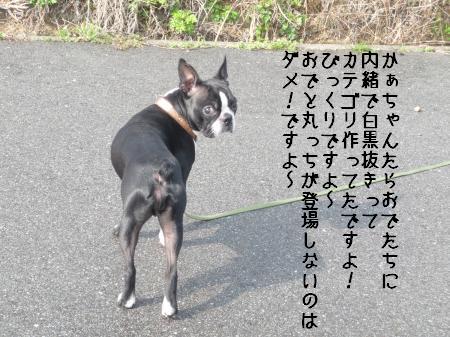 P1070055_convert_20100316234133.jpg