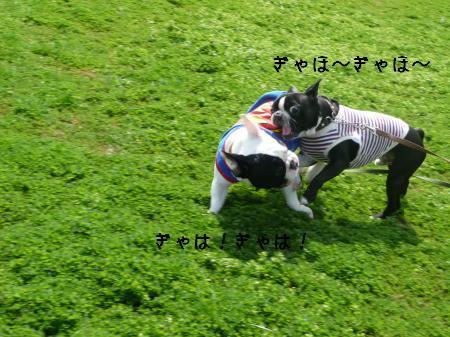 P1070500_convert_20100413210539.jpg