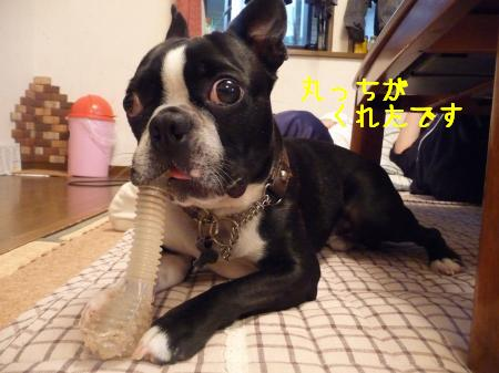 P1080278_convert_20100520211439.jpg