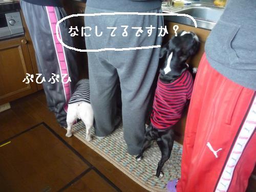 P1100423_convert_20101123201335.jpg