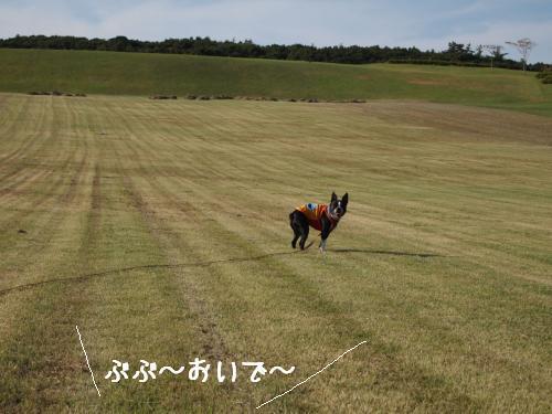 PA020966_convert_20101006131055.jpg