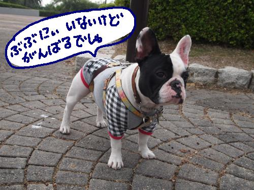 PB071394_convert_20101107220714.jpg