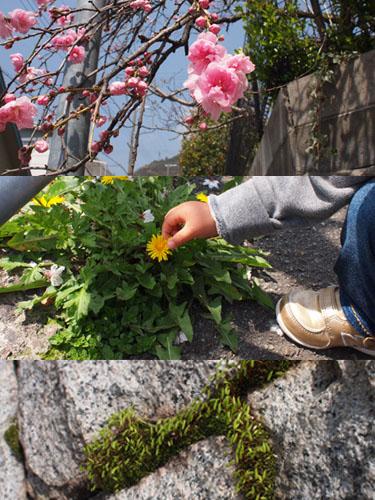 0406_flower.jpg