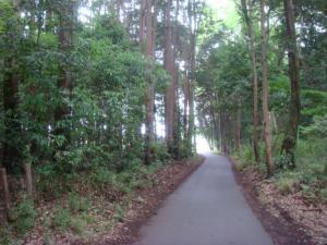 1散歩道①