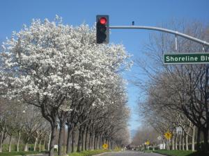 2008 春 ショーラインカリフォルニア春
