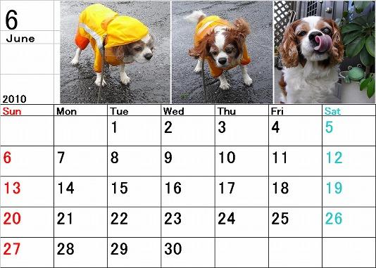 ブルポカレンダー6月