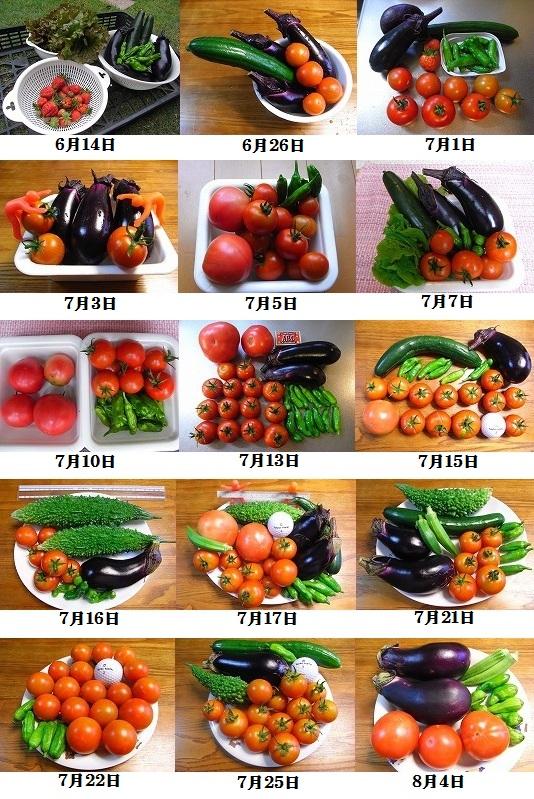 2010年夏野菜収穫の抜粋