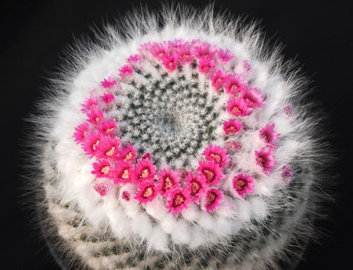 カードの銀河の花