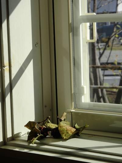 mado 窓