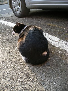 動物(猫)