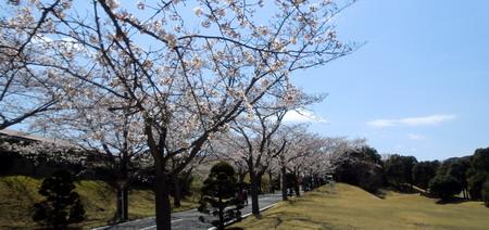 20120408sakura3-450w.jpg